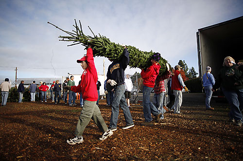 it takes several davis boy scouts to unload a 10 foot tall christmas tree from the truck friday morning at the tree lot at mace and cowell boulevards in - Boy Scout Christmas Trees