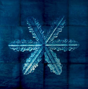 "An 8-by-8-foot snowflake cyanotype by Robin Hill, an associate professor of art at UC Davis, is among the works on exhibit as part of ""Between the Quotes: Work by UC Davis Art Faculty"" at the Pence Gallery. The show opens Jan. 11 and will be up through Feb. 29. Courtesy photo"