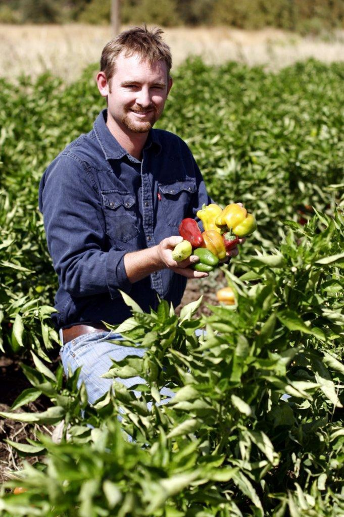 Thaddeus Barsotti, chief farmer and co-CEO of Farm Fresh To You/Capay Organic, shows off fresh-picked sweet peppers that will be donated to Yolo County elementary and Head Start school lunch programs in October as part of its new Harvest of the Month program. Courtesy photo
